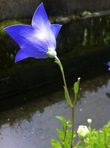20120725i (3)