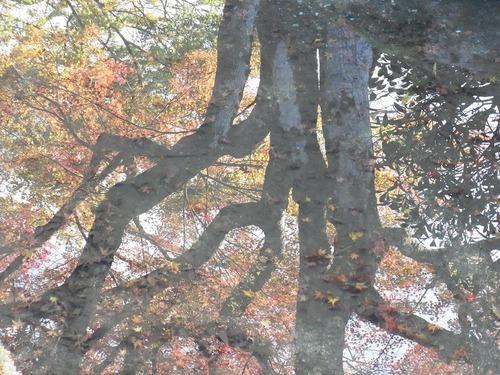 20111122ohhara -jikkoin(140)