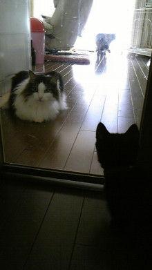 京都在住≪兎椛≫楽園猫生活-DVC00150.jpg