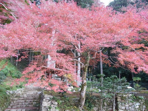 20111122ohhara -shorinin(104)