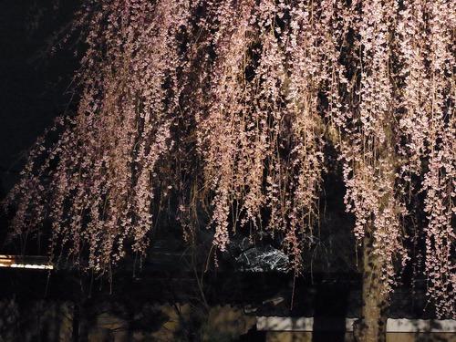 20130322koudaiji (24)