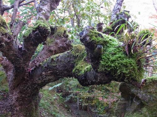 20111122ohhara -hosenin(35)