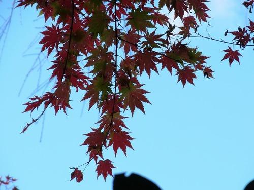 20111122ohhara -hosenin(43)