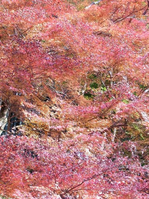 20111122ohhara -shorinin(103)