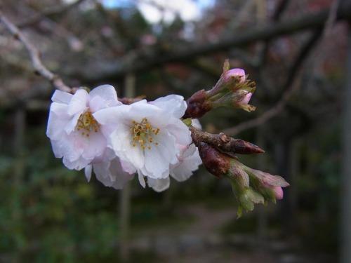 20111122ohhara -jikkoin(144)