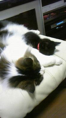 京都在住≪兎椛≫楽園猫生活-DVC00155.jpg