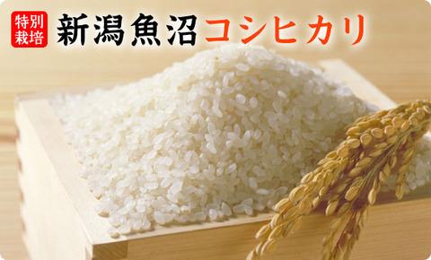 uonuma-koshi