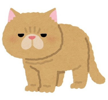 cat_exotic_shorthair