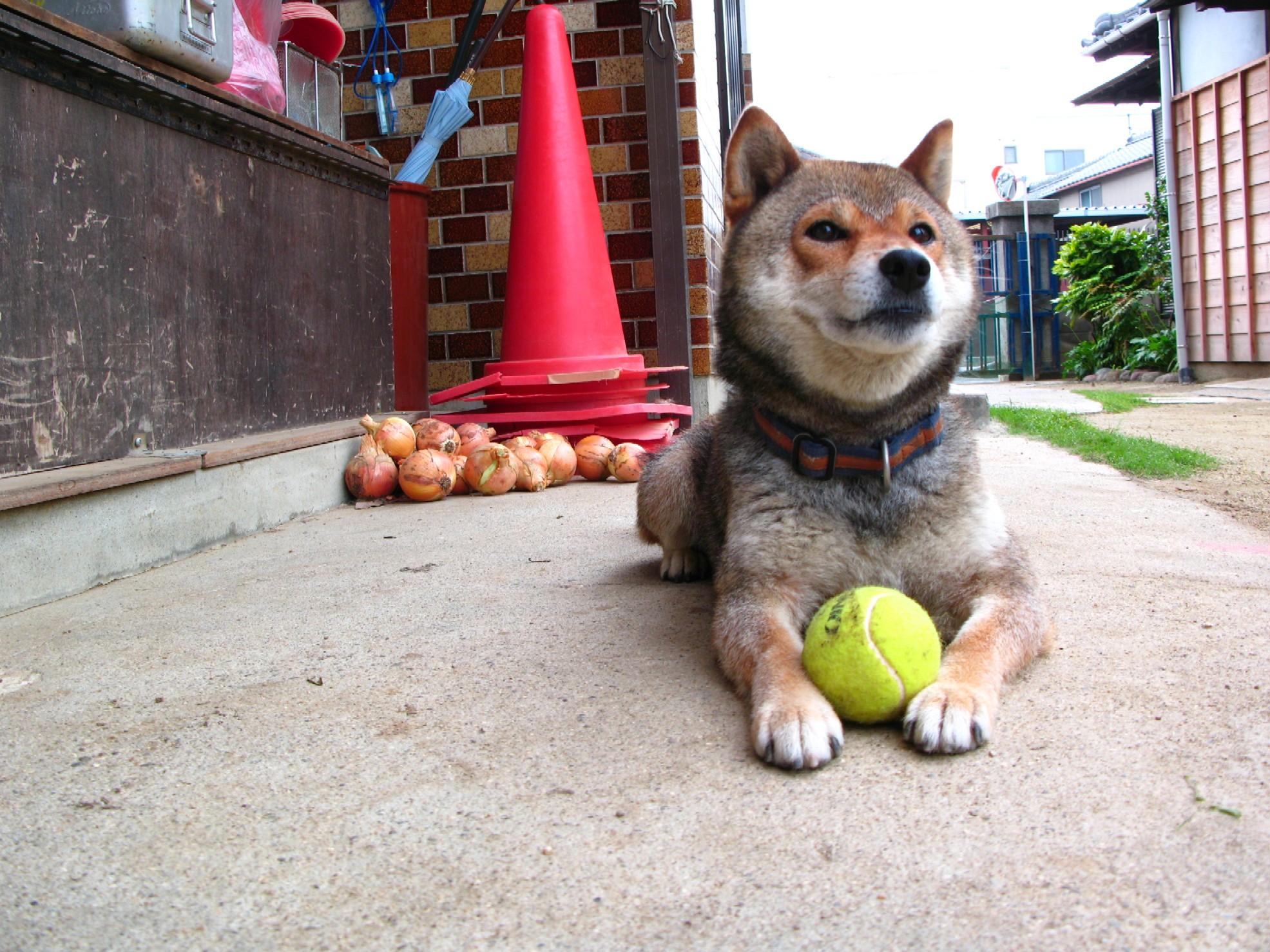 遊んで欲しいなぁ〜