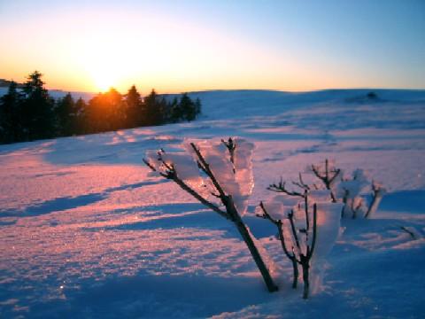 燃える樹氷