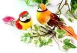 little bird clip