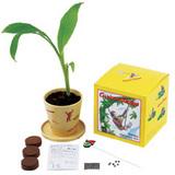 バナナ栽培セット1