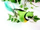 little bird clip2