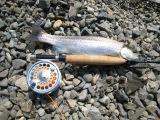 鱒釣りの休日2