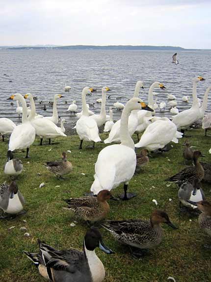 クッチャロ湖1