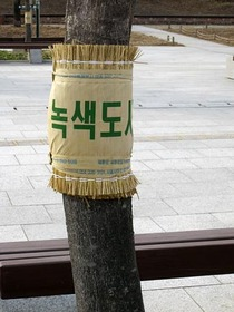 韓国こも1