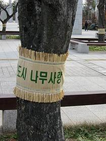 韓国こも2
