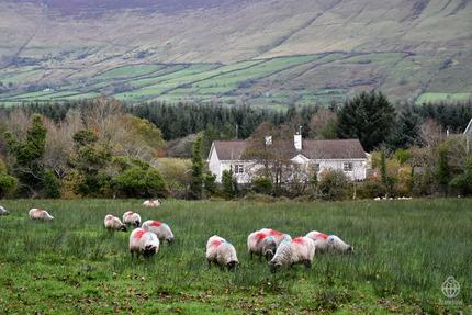 アイルランド景色3
