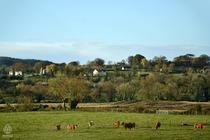 アイルランド景色1
