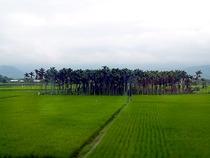 台湾鉄道11