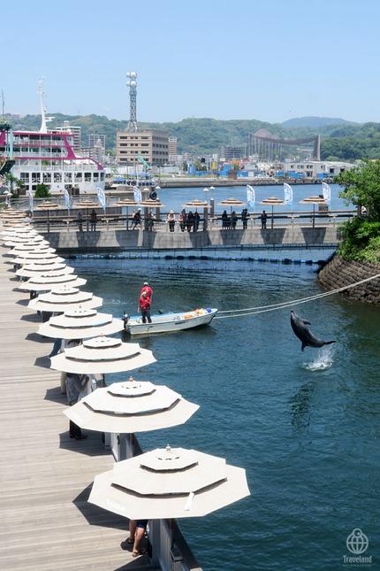 鹿児島イルカ1
