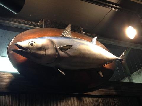 katsuokobushi06