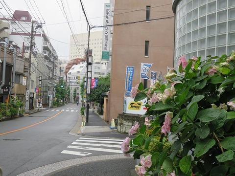 ohimachiwaka19