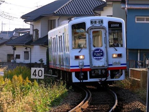 shinkyosanuki02