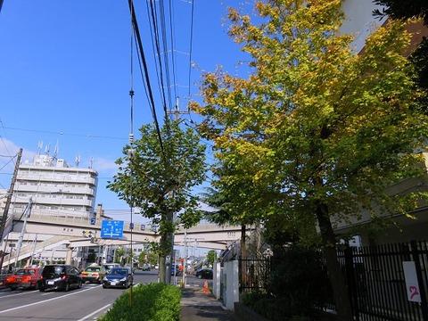 yahiroraishuken03