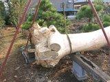 笠懸鹿の松梁2