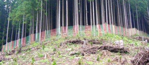 鹿食害防護柵