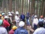 伐採見学会