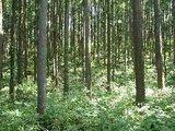 健全な森林