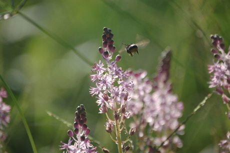 秋・花と蜂