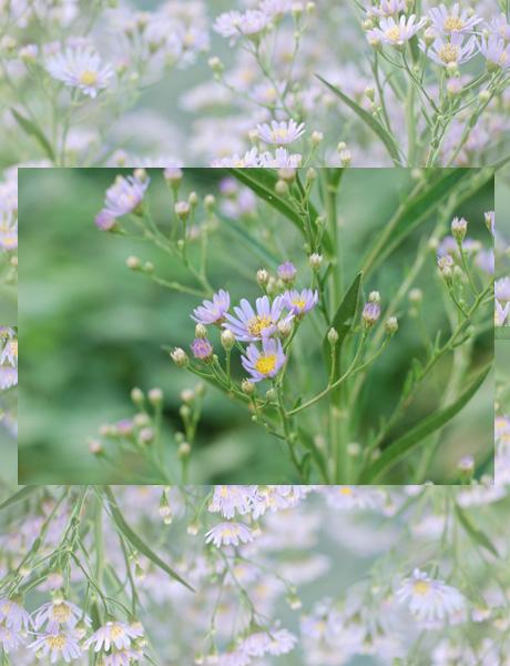 秋・野の花