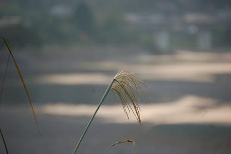 秋・熊野川とススキ