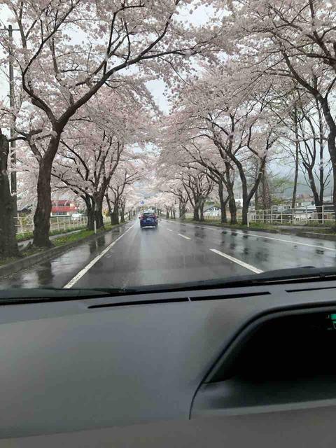 来さまい大畑桜ロード