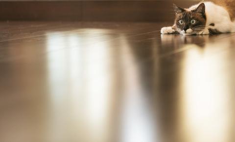 cat9V9A8987_TP_V1