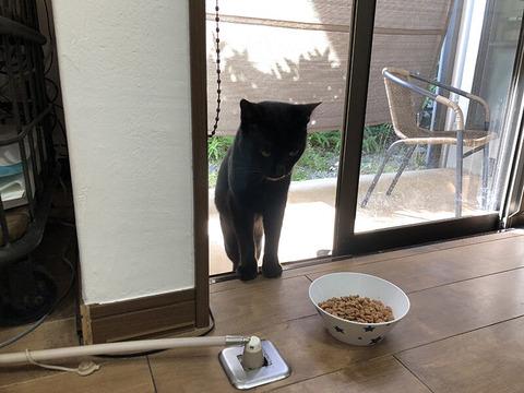 野良猫が家に入ってきた