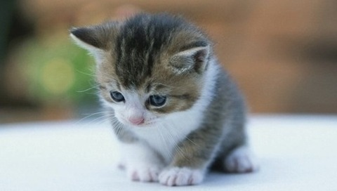 ネコネコたんのきゃわわ画像くだぱい!
