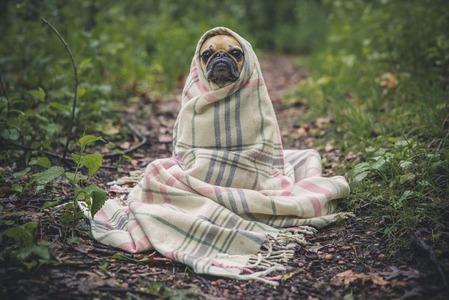 cute-dog-in-blanket
