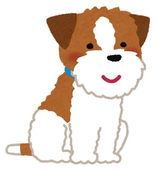 dog_jack_russell_terrier