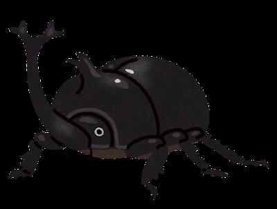 bug_kabutomushi_osu_black