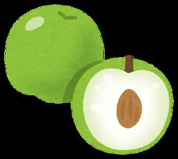fruit_indo_natsume