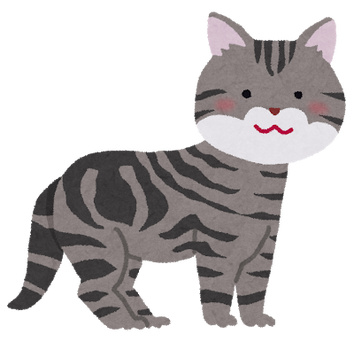 cat_american_shorthair
