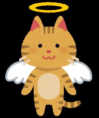 pet_angel_cat