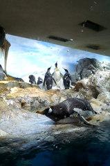 ペンギンルーム