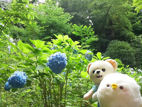 20160713_azisai