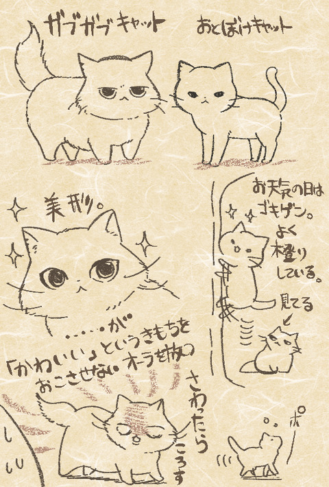otoboke_gabugabu_cat