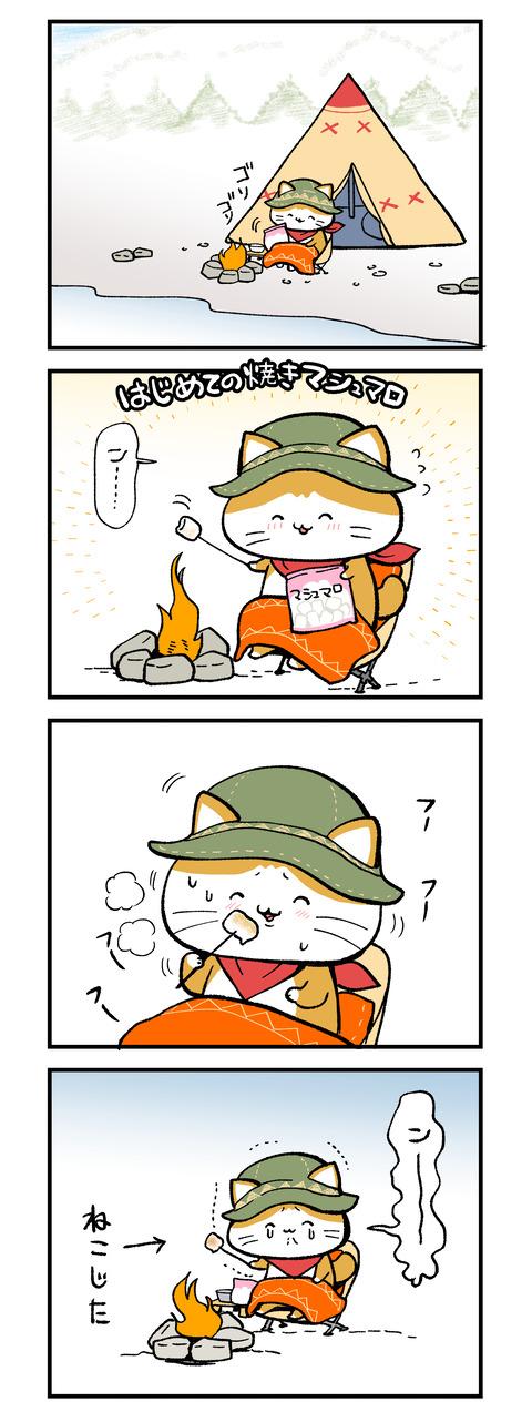 campcat_kouan